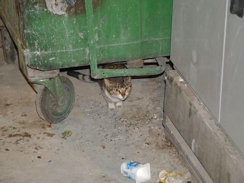 cat 245/248