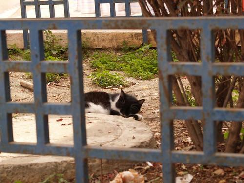 cat 14/248