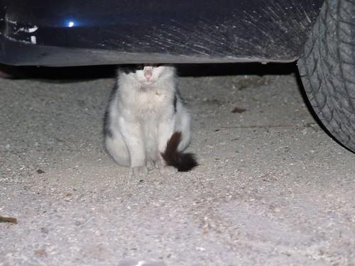 cat 23/248