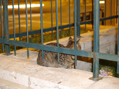 cat 36/248