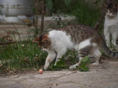 cat 133/248