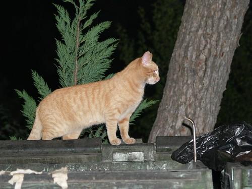 cat 158/248