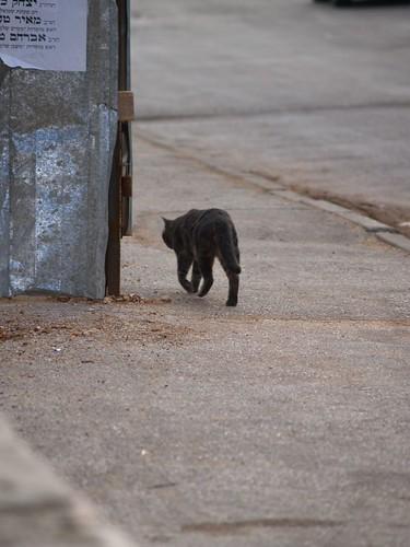 cat 159/248