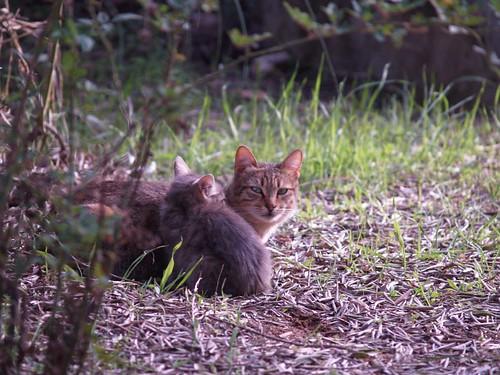 cat 207/248