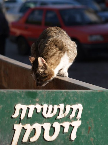 cat 215/248