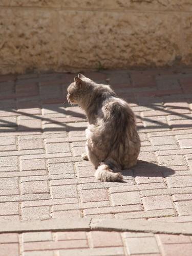 cat 222/248
