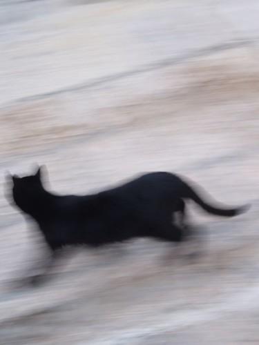 cat 238/248