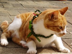 Serena the Cat wearing a lei