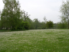 Tusenskönor i parken