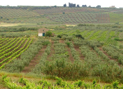 Europe 06 Sicily 240