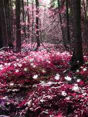Magic forest: Pink photo by Sameli