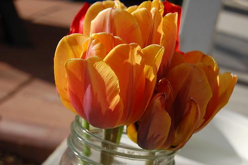 Orange/Pink Tulips