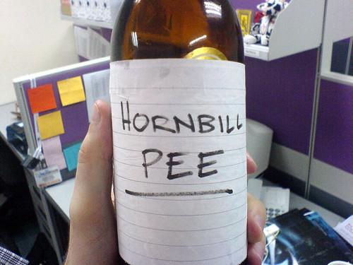 Hornbill Pee
