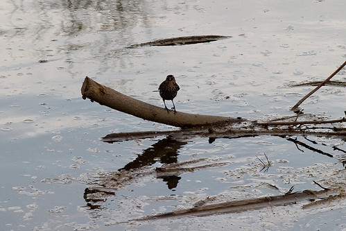 Bird in credit river