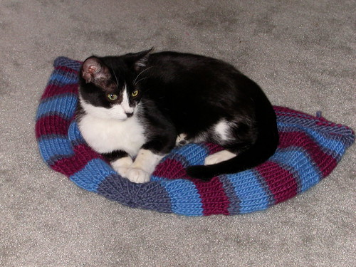 Buster on the unfelted Kitty Pi