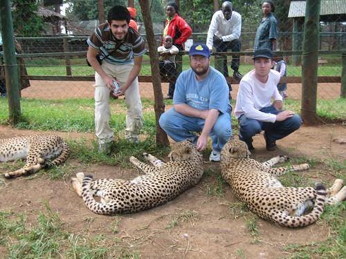 Nice Cheetah