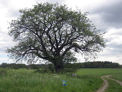 That Old Tree (with the swedish flag)
