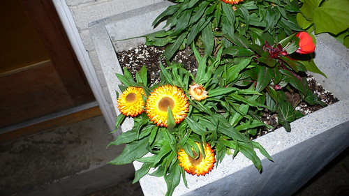 Flowers Under Flash