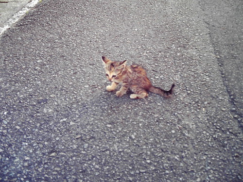 kitty / 子猫