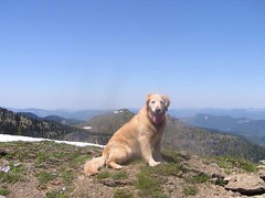 Mutt on mountain (Sadie on Mutton Mt. with Noble Nob behind her)