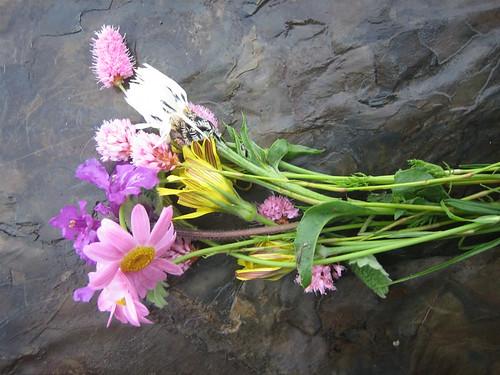 flowers-gergeti