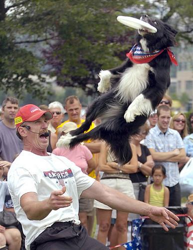 Fly, doggie!