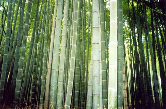 bamboo, environmental, green building 101, plyboo
