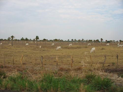 El Llano de Guárico