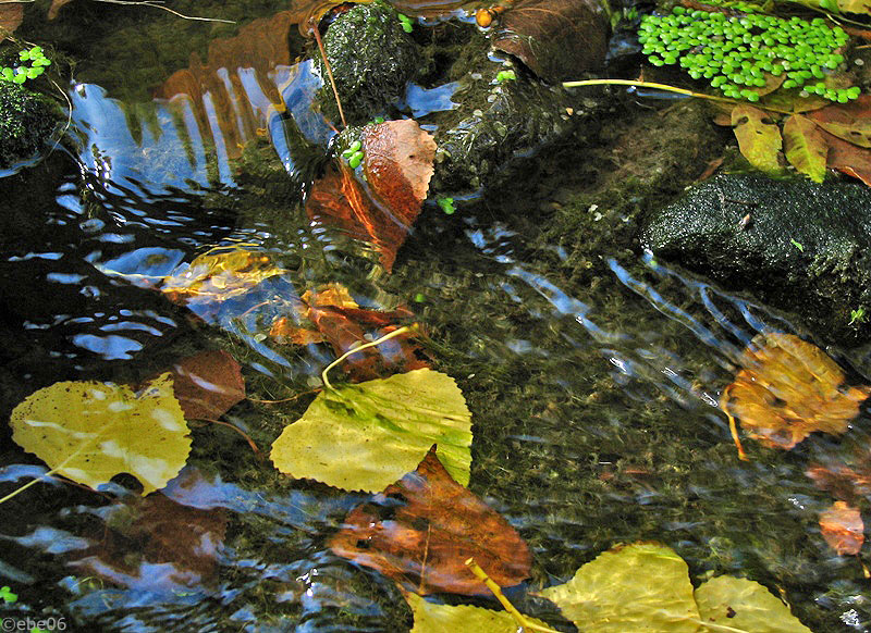 El otoño ya fluye
