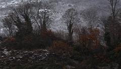 hiver70 photo by bulbocode909