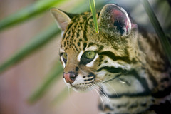 Nice profile of Nelson photo by Tambako the Jaguar