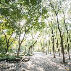 Lindgrün (Lime Green) - Hangzhou photo by Andy Brandl (PhotonMix.com)