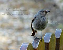 Non abbiate timore, voi valete più di molti passeri... photo by Sogni di Scricciolo