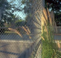 Good Fences Make Good Neighbors photo by macromary