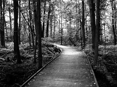 The wooden path (Explored!) photo by SCOTTS WORLD