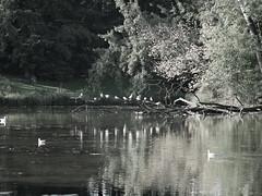 in a park photo by Darek Drapala