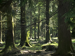 The Woods photo by Lloyd Hunt