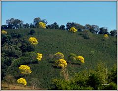 Natureza florida. photo by o.dirce