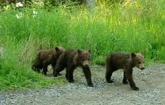 The Three Little Bears photo by SandyK29
