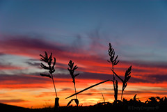 sunset weeds photo by IndyEnigma