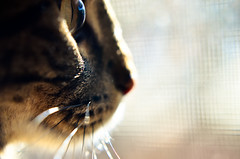 Mr. Marbles bird watching through the window photo by Mrs Sarah Pierce Photography