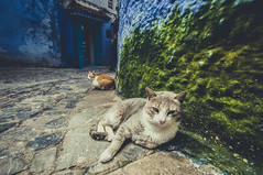Cats in the painting book photo by Lomoody
