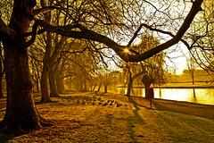 Sunburst Embankment (Explored) photo by Rob Felton