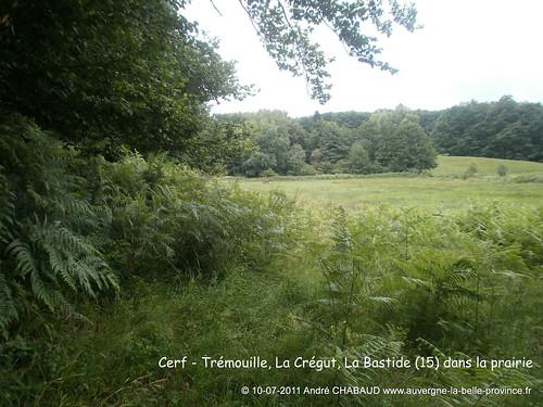 Bois et prairie-La Bastide (Cantal)