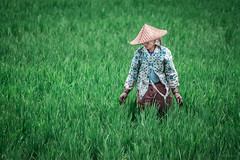 Farmer in Ubud, Bali, Indonesia photo by ShivRamky
