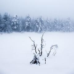 Untitled photo by Svein Nordrum
