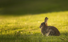 Hop A Long photo by Mike Docherty