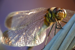 Frolics with Dragonflies photo by Frolics With Dragonflies