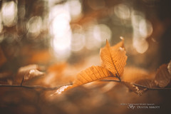 The Parchment of Autumn photo by Thousand Word Images by Dustin Abbott