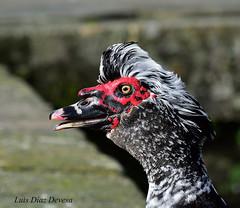 Soy un pato photo by Luis Diaz Devesa